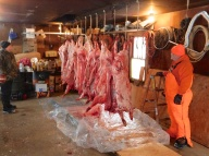 After slaughter, the hogs are cleaned, split and left to cool.