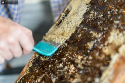 decapping the honey frame